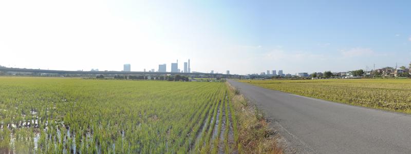 のどかな見沼田んぼや近所の公園を楽しく散歩
