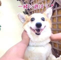 ニコニコ犬ちゃん