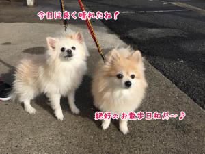 お散歩日和