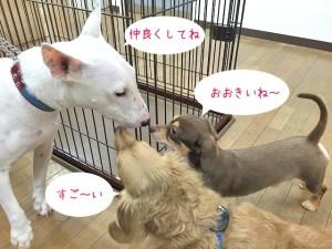 ご挨拶する犬ちゃんたち
