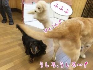 じゃーんぷ