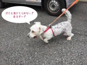つられて走る犬ちゃん