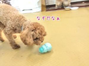 なぞおもちゃと犬