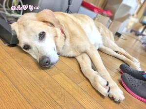 のんびり休む犬