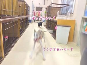 スプリンター犬ちゃん