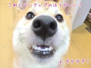 ドアップ犬