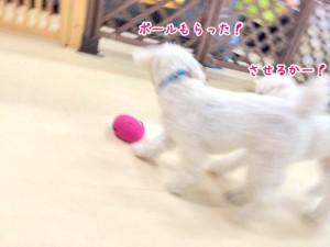 ボールいただき!