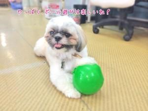 ボールが楽しい犬
