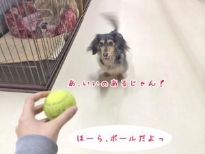 ボールだよっ