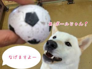 ボールだー