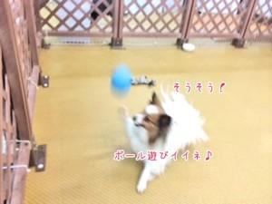 ボールでとっても楽しそうな犬ちゃん