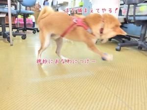 ボールで遊ぶ楽しそうな犬ちゃん