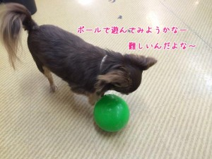 ボールで遊ぼうかな