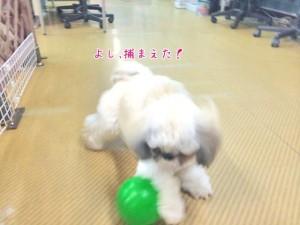 ボールを捕まえた犬