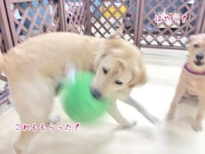 ボール取り名犬