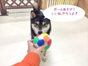 ボール遊びしましょ