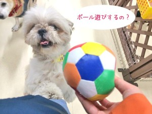 ボール遊びするの?