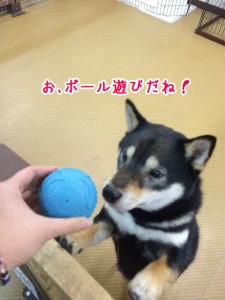 ボール遊びだね