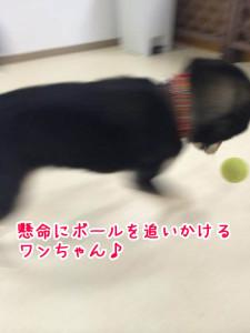 ボール遊びもしました!