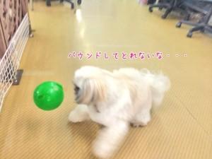 ボール遊び中の犬