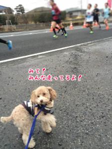 マラソンだ~