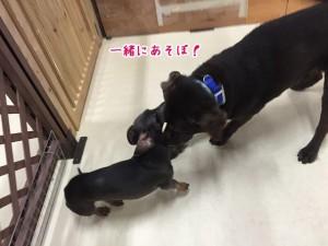 一緒に遊ぼう!