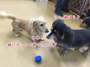 一緒に遊ぼう