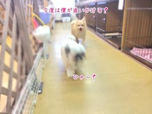 別の犬ちゃんと追いかけっこ
