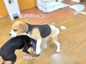 反撃の犬ちゃん
