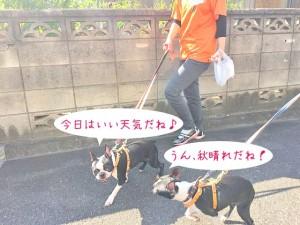 楽しくお散歩犬ちゃん