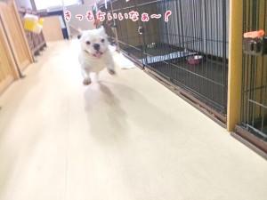 気持ちよく走る犬ちゃん