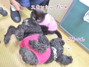 犬ちゃん猫ちゃんのスキンシップ