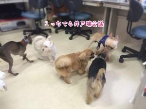 犬の井戸端会議