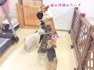 犬の大運動会?