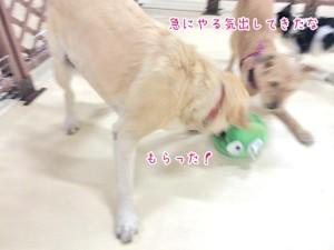 犬の遊びスイッチオン