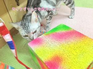猫ちゃんとサイケデリック