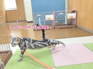 猫ちゃんの準備運動