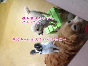 ペットホテル 大型犬と小型犬