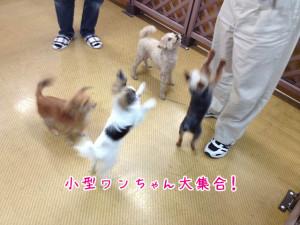 ペットホテル 小型犬集合