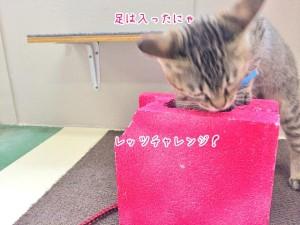 足を入れる猫ちゃん