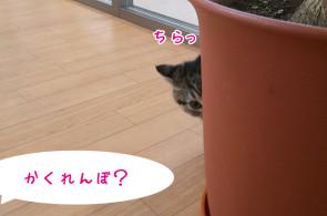 ペットホテル さいたま 猫