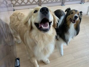 ペットホテルで犬ちゃんにこにこ