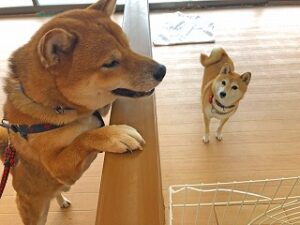 犬ちゃん達、一緒に遊びたいのかな?