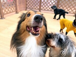 仲良し犬ちゃん。