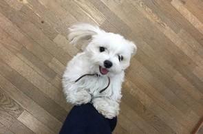 遊ぼう、犬ちゃん