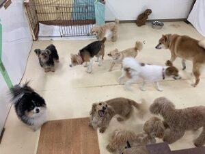 ペットホテルは今日も犬ちゃんいっぱい