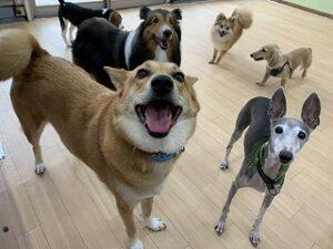 沢山の犬ちゃんがペットホテルに来ています