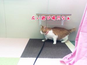 猫ちゃんプレイルーム