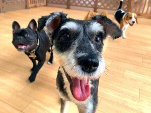 カメラに向かってドヤ顔の犬ちゃん。
