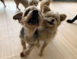 犬のお友達とツーショット